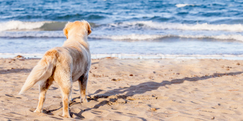 Dog friendly accommodation